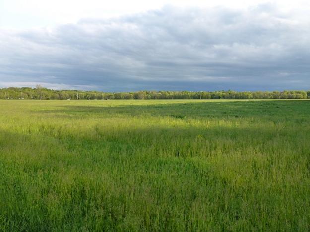 55 Field
