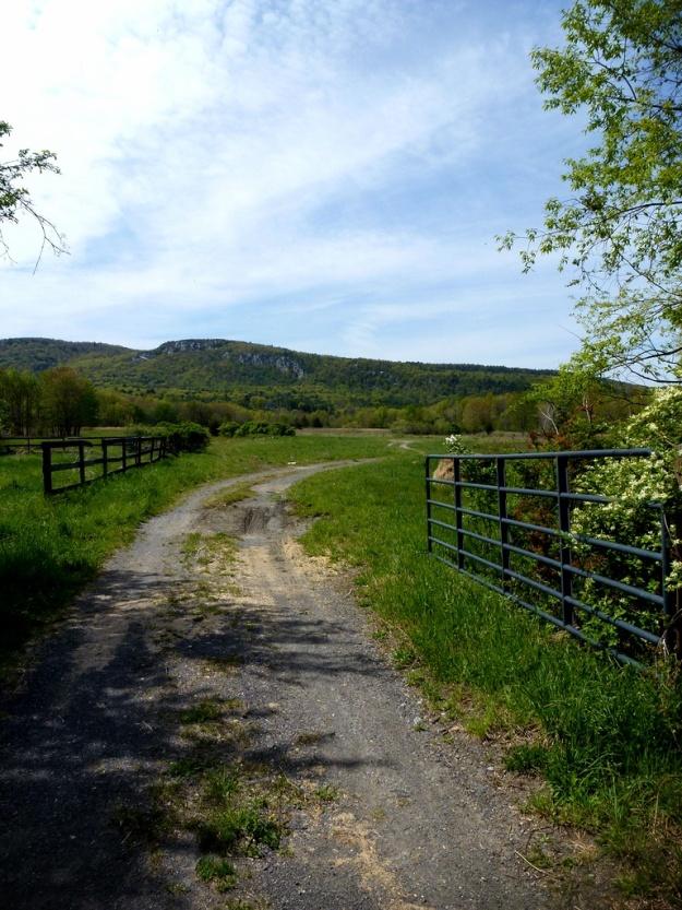 8 bike path_pe
